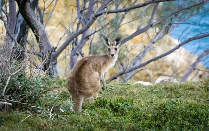 wildlife-spots-in-australia-1