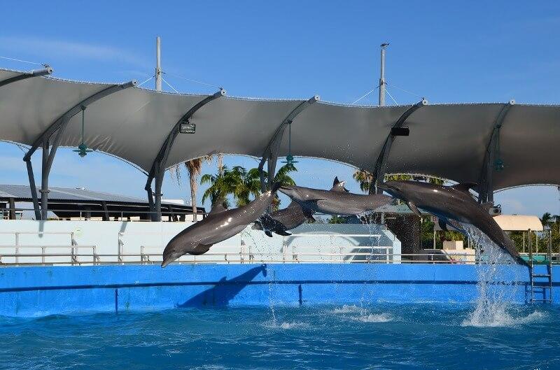 the-miami-seaquarium