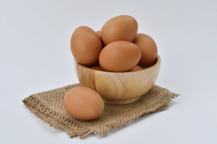benefits of protein diet